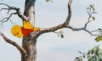 Winnie the Pooh Time to munch an early lunch