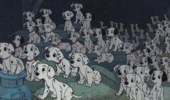 Cachorros Dálamta