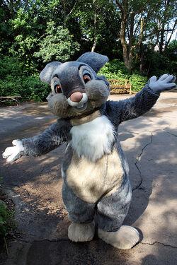 Thumper DP