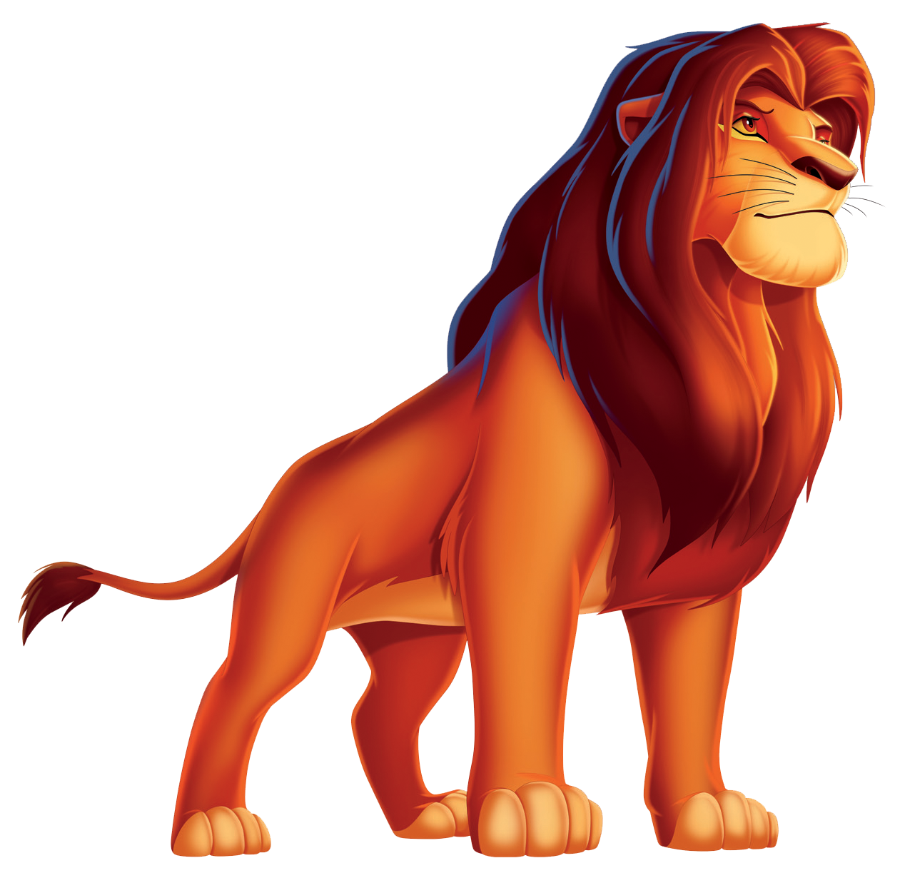 Why the lion is the king of the beasts Description of the lion, habitat and way of life 3