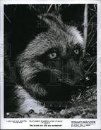 The silver fox and sam davenport