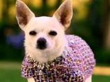 Chloe (Beverly Hills Chihuahua)