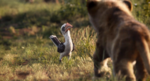 The Lion King (2019 film) (14)