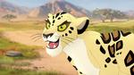 The-golden-zebra (45)