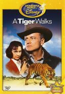 1964-tigre-4