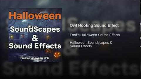 Owl Hooting Sound Effect
