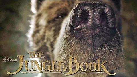THE JUNGLE BOOK - Das ist Balu - Ab 14
