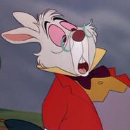 White Rabbit - Raafat