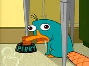 Perry as a mindless animal