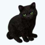 Pets - Cat Salem