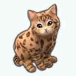 Pets - Cat Masako