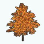 HarvestSpin - Fall Maple Tree