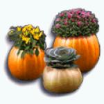 TheVault - Pumpkin Planters