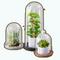 GreenAddictDecor - Glass Dome Plants