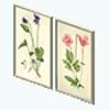 SchoolhouseOfficeDecor - Botanical Prints