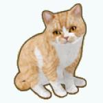 Pets - Cat Bosco