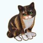Pets - Cat Coco