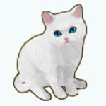 Pets - Cat Snowball