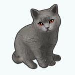 Pets - Cat Mr Mew