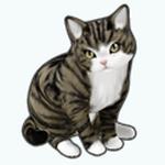 Pets - Cat Marv