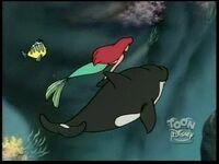 Whale32