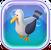 C-seagulls-fn