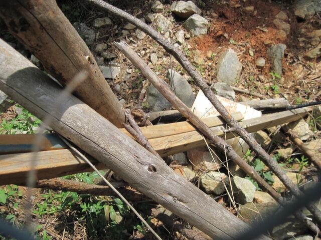 File:Nature Trail 004.jpg