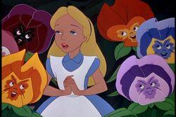 Alice236
