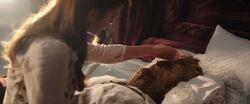 Belle nursing the Beast