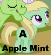 Apple Mint