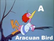Aracuan Bird
