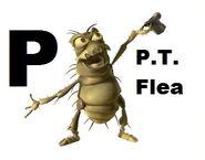 P.T. Flea