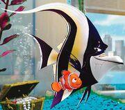 Nemo and Khan
