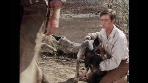 Walt Disney's Savage Sam 1963 Sam Fights the Wolves