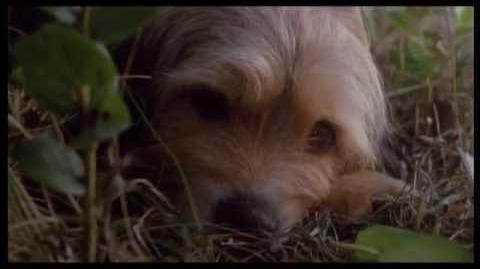 Bộ phim chú chó Benji The Hunted P1