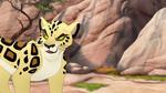 The-golden-zebra (607)