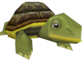Shelby (Tortuga)