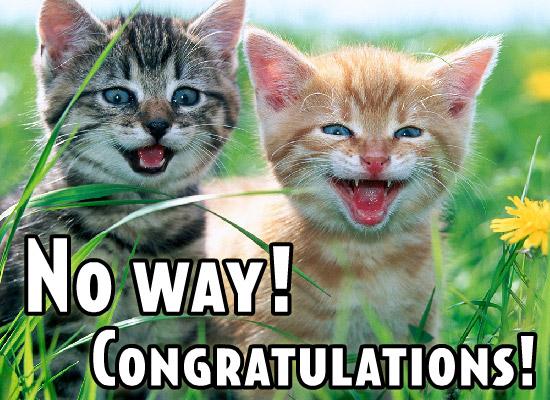File:CongratsCats.jpg