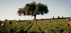 Amity Farming the Land