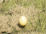 Чешуйчатое яйцо феникса