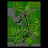 DOS2 Растение Листья чая