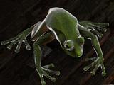 Corrosive Amphibian (DoS2)
