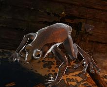 Charged Amphibian