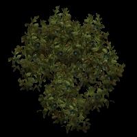 Ob bush14