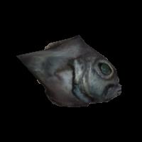 Ob fish01f