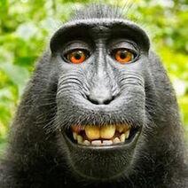 85730600 monkey2