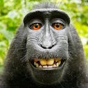 Monkey10kb