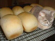 Cat-loaf-27