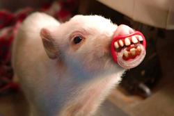 Wimpy Kid Pig
