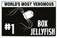 World's Most Venomous Box Jellyfish